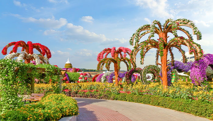 Sunny photos of flowered trees and bushes in Dubai's Miracle Garden.