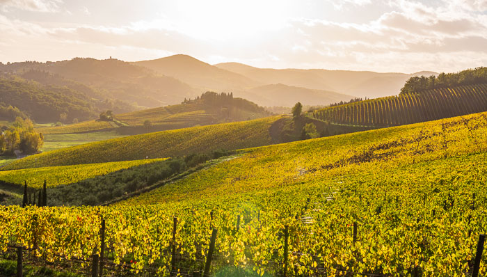 Scenic view of chianti Vineyards in autumn near the small and famous town of Radda in Chianti
