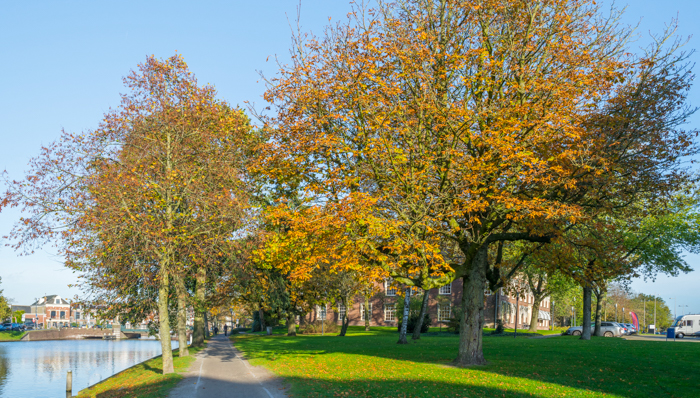 Walking in a sunny park in autumn