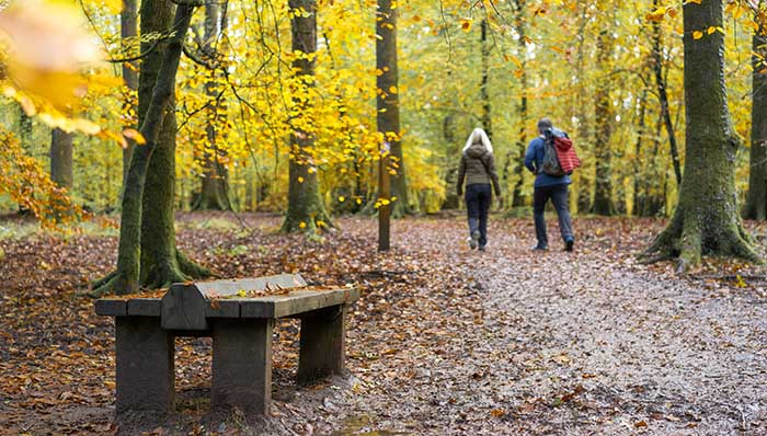 A walk in the woods, forest vibe. 2 people strolling through the woods with dry leaves on the ground. Autumn, fall.