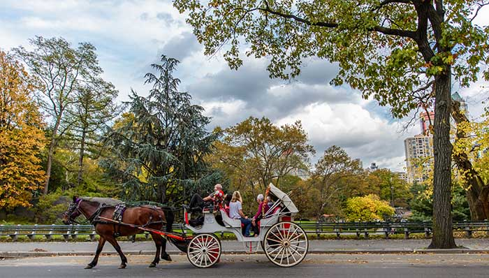 Family cruising around New York City on a horse-drawn carriage.
