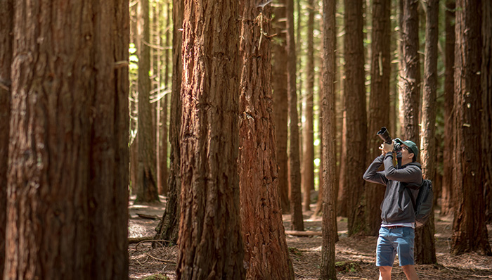 Photographer wearing green cap taking photo in Redwood forest.