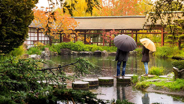Couple in the rain with umbrellas in a Japanese garden.