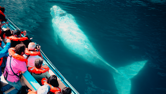 a group of tourists on a whale watching cruise