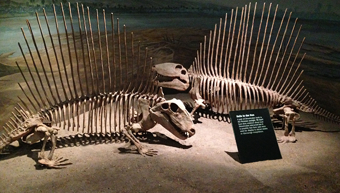 a picture of dinosaur carcasses on display