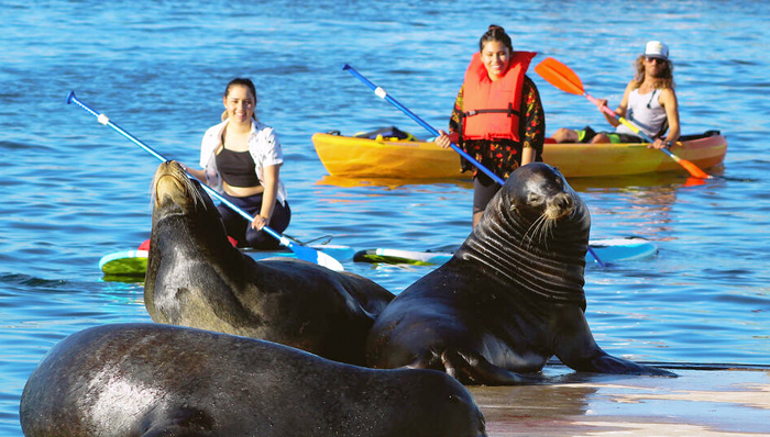 Visiting sea lions in Los Angeles